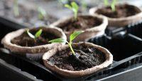 Jak se mi zahradničení dostalo pod kůži