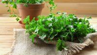 4 tipy jak na bylinky na parapetu