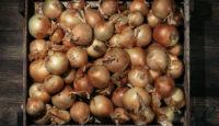 Jak skladovat zeleninu a ovoce