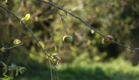 11 kroků, jak zazimovat zahradu