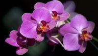 3 pokojové rostliny pro začátečníky