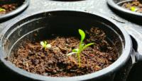 4 tipy, kde koupit semínka
