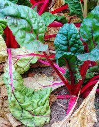 11 tipů, aby zahrada přežila sucho