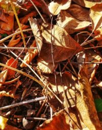 5 důvodů, proč nehrabat listí