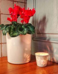 4 netradiční vánoční kytky