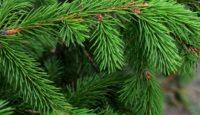 6 tipů na vánoční dárky, které budete milovat