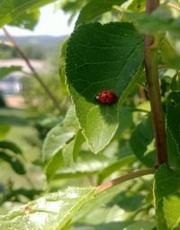 5 důvodů, proč si hýčkat hmyz na zahradě