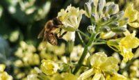 Louka pro včely – 5 důvodů, proč si ji pořídit