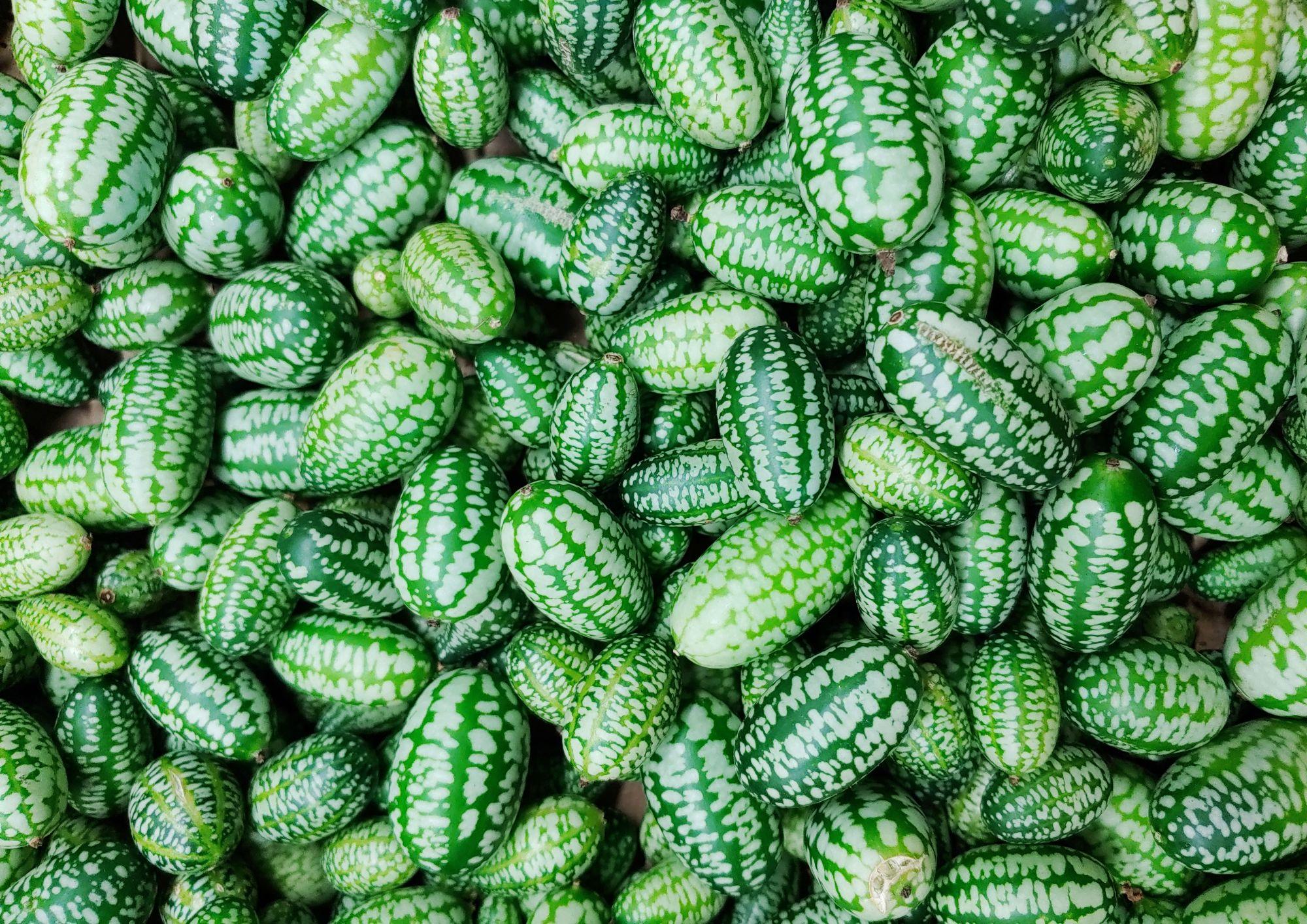 Mexická okurka