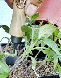 Vypěstujte si opravdové jídlo na parapetu nebo terase