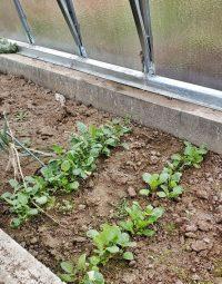 Příprava skleníku na novou sezónu
