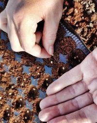5 tipů na výsev semínek pro začátečníky