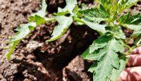 5 rad na pěstování zeleniny pro začátečníky